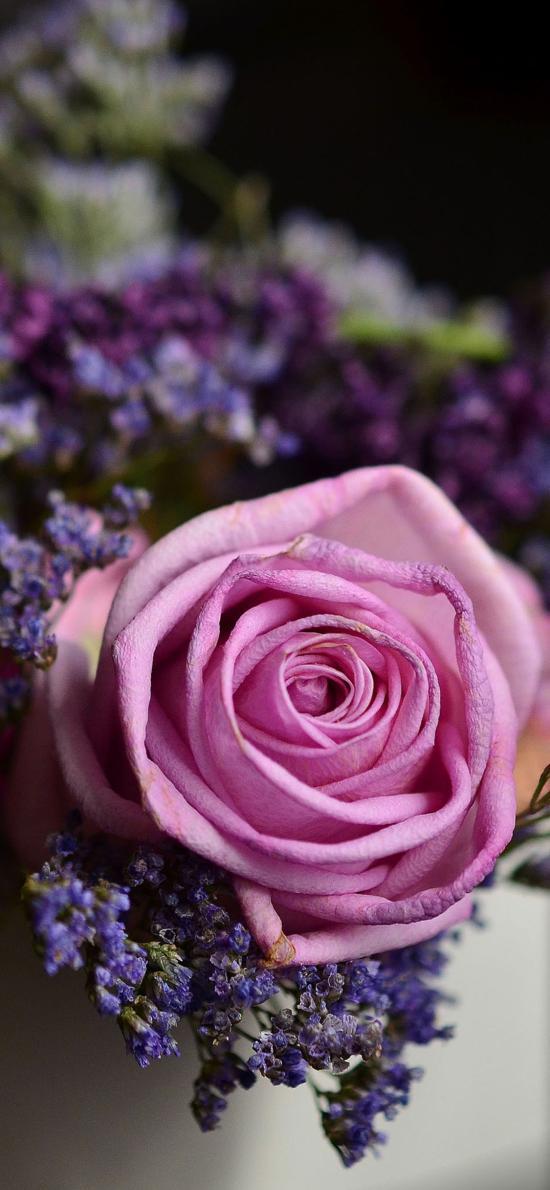 玫瑰花 粉色 紫色花束搭配