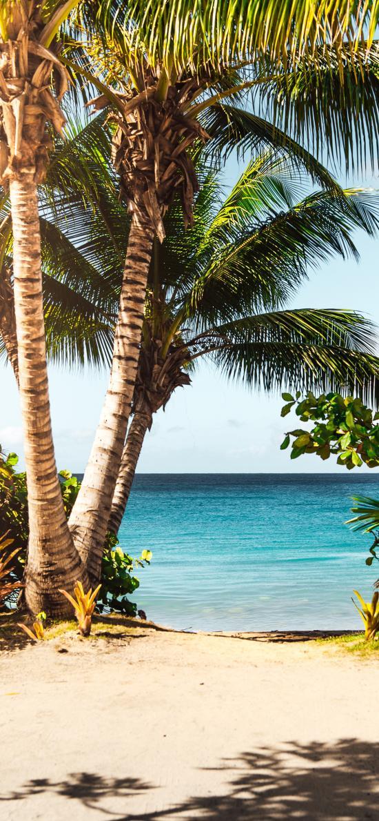 椰树 海岸 沙滩 大海
