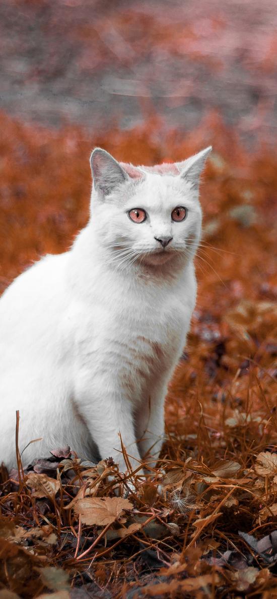 猫咪 动物 户外 树叶 枯黄