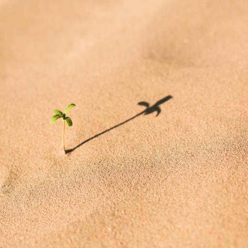 沙滩 细沙 绿芽 生命力