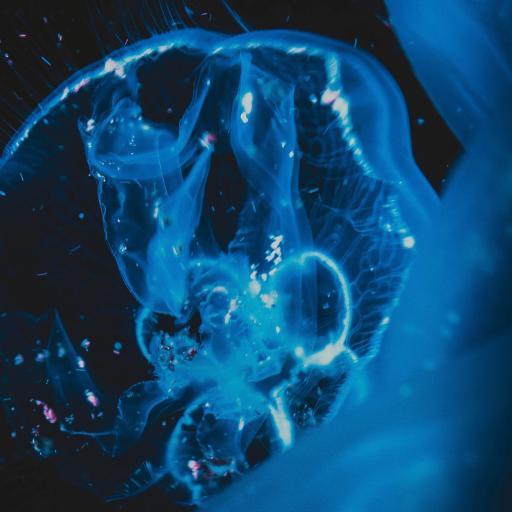 海洋生物 水母 蓝色