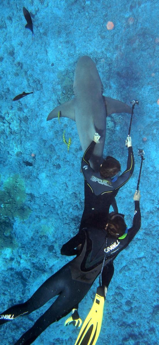 潜水 海底 鲨鱼 海鱼