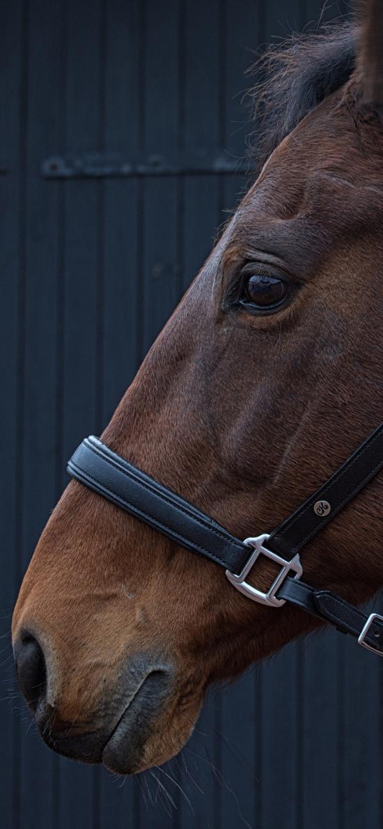 马 牧场 饲养 绳索 棕色 牲畜 动物