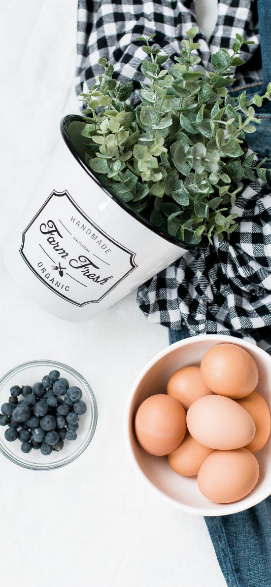 雞蛋 盆栽 藍莓 衣物