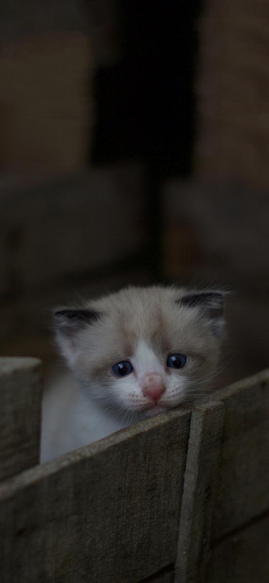 喵星人 宠物 小奶猫 可怜巴巴
