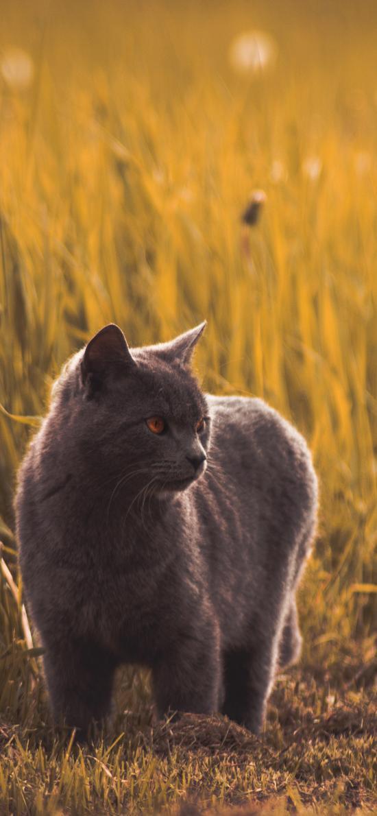 小猫 猫咪 宠物 户外 草地