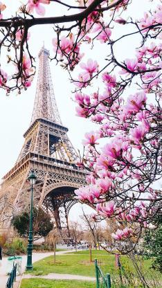 鲜花 景点 埃菲尔铁塔 法国