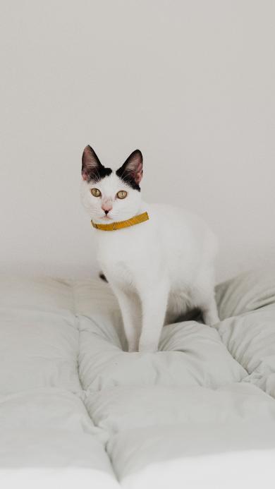 猫咪 宠物 简约 白猫