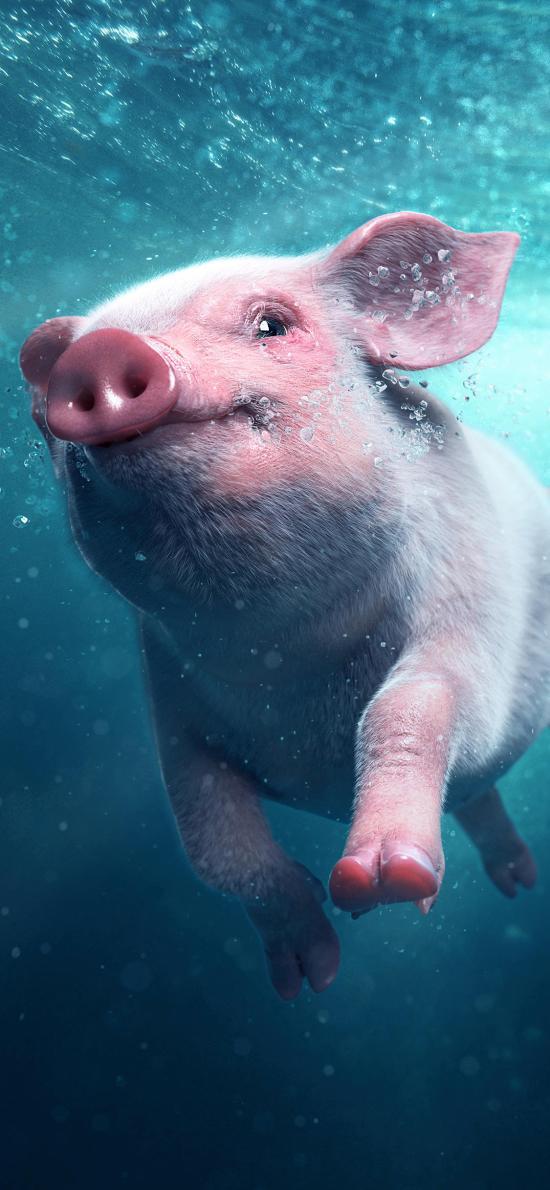 麦兵兵之夺宝联萌 猪 电影 游泳 可爱