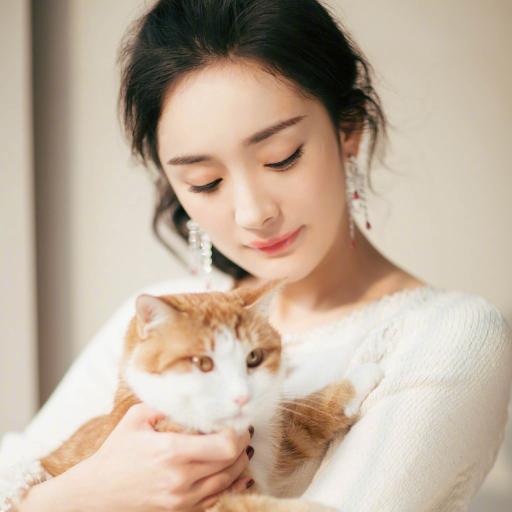 杨幂 演员 明星 艺人 幂幂 猫咪