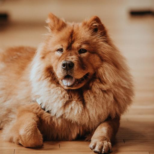 狗 犬 汪星人 可爱 宠物