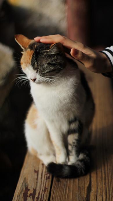 猫咪 抚摸 宠物 皮毛