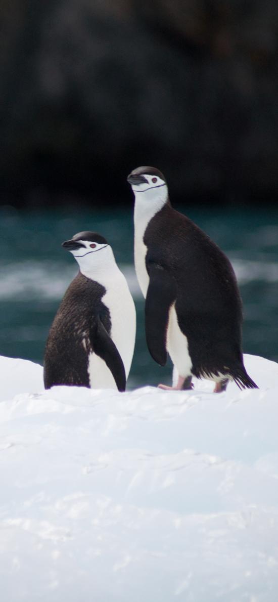 南极 企鹅 保护动物 冰块
