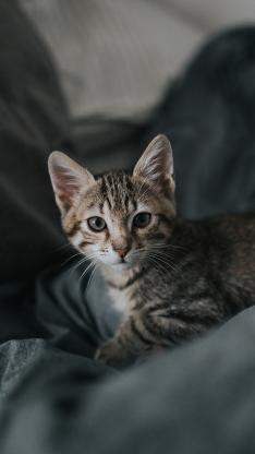 宠物猫 喵星人 花猫 幼崽