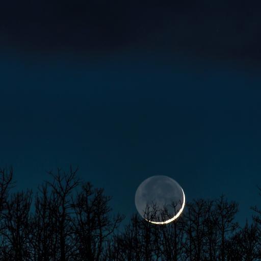 夜景 天空 月亮 树木