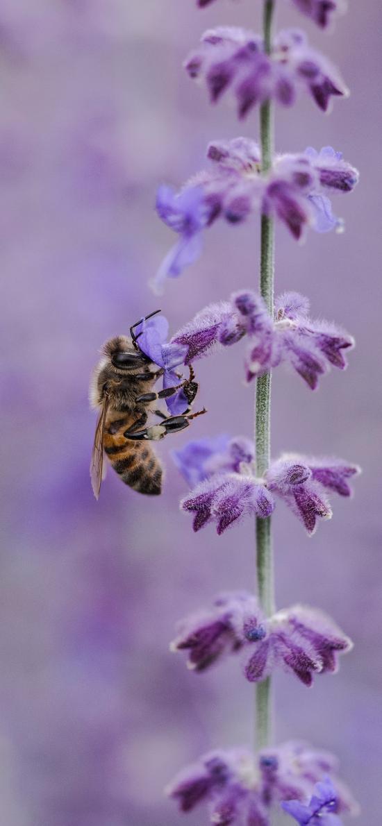 蜜蜂  植物 采蜜 飞行