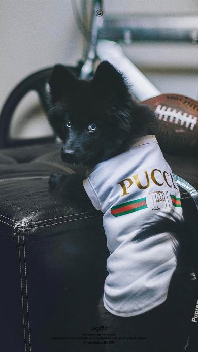 宠物狗 汪星人 Gucci衣服