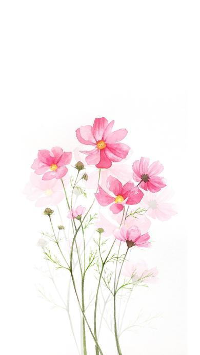 白色背景 手绘 鲜花 粉色