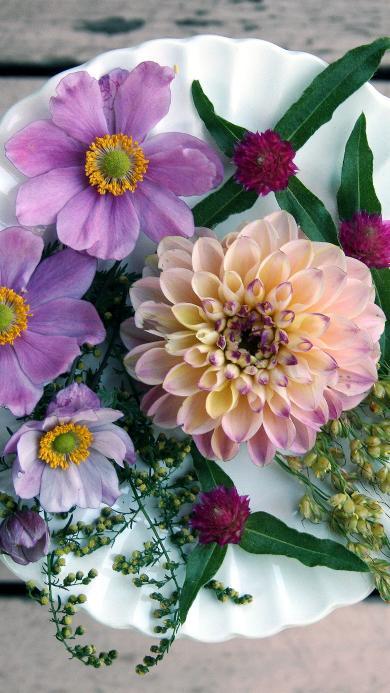 鲜花 盛开 摆盘 艺术