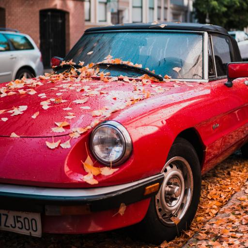汽车 银杏树 落叶 红