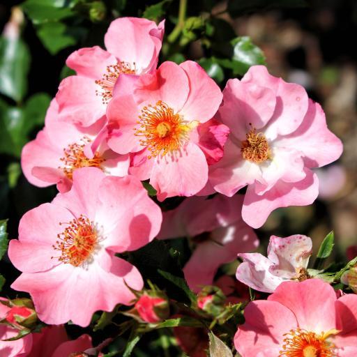 盛开 花蕊 鲜花 植物