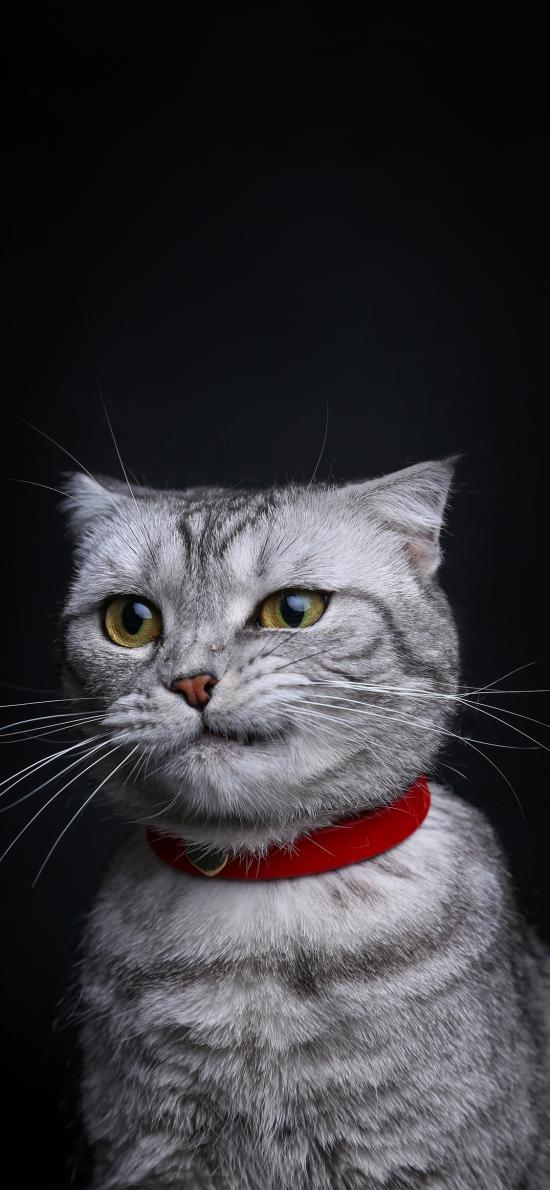 猫咪 可爱 喵星人 宠物