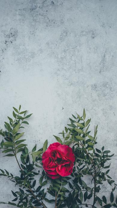 鲜花 枝叶 盛开 唯美