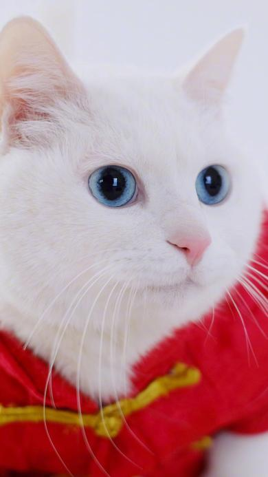 猫咪 可爱 喜庆 喵星人 宠物