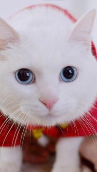 猫咪 可爱 红包 喵星人 宠物 萌