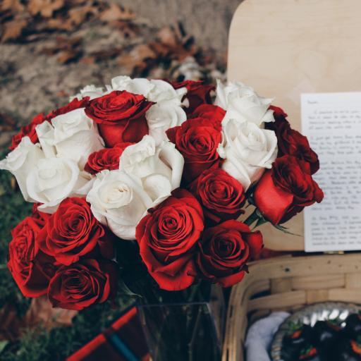 玫瑰  花朵 鲜花 红白