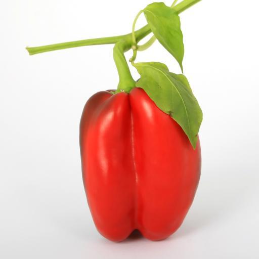 甜椒 辣椒 太空椒