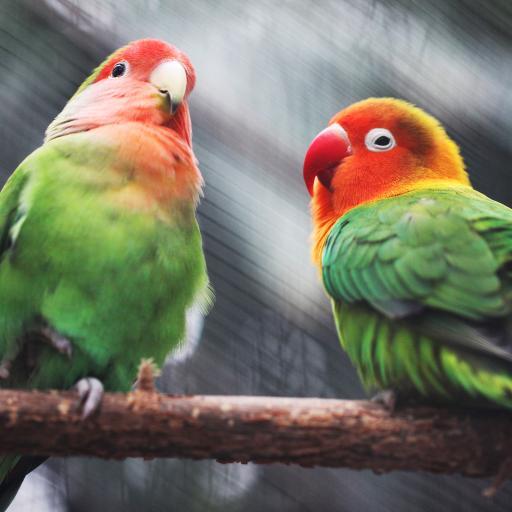 鹦鹉 鸟 羽毛 色彩