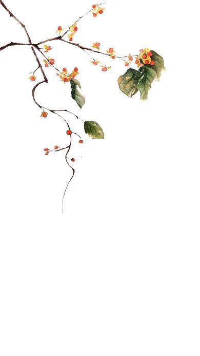 白色背景 手绘鲜花 枝叶