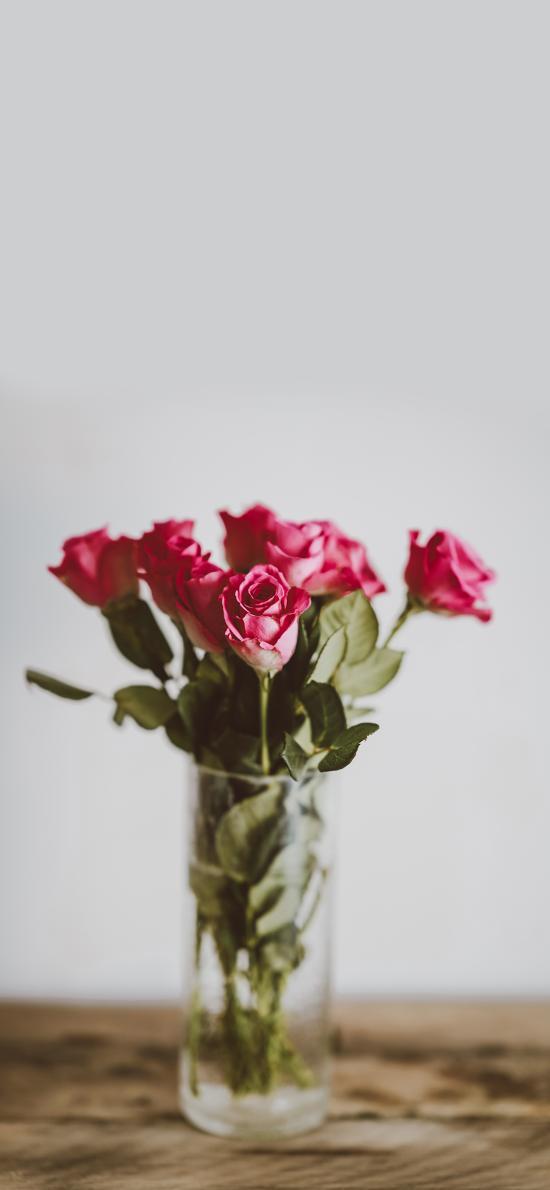 鲜花 玫瑰 花瓶 枝叶