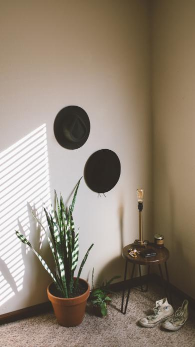 家居 盆栽 花草 装饰