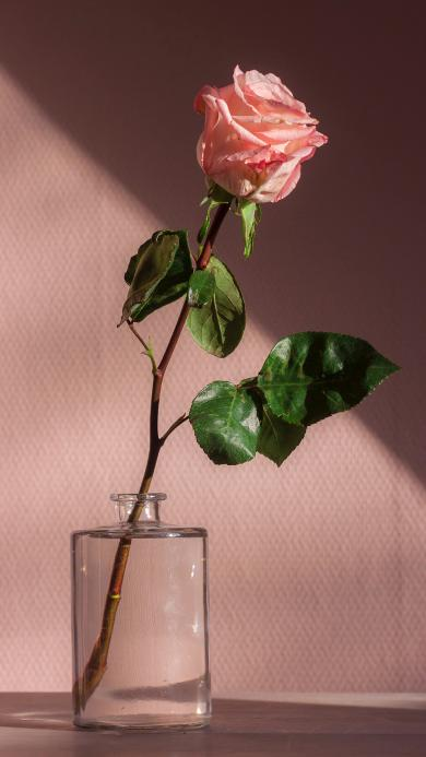 玫瑰 鲜花 花瓣 枝叶 花瓶