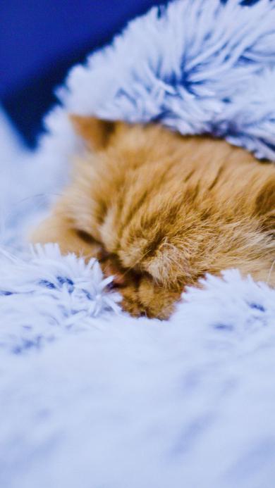 宠物猫 橘猫 毛毯 睡觉