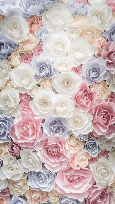 花 平铺 浪漫 玫瑰 色彩
