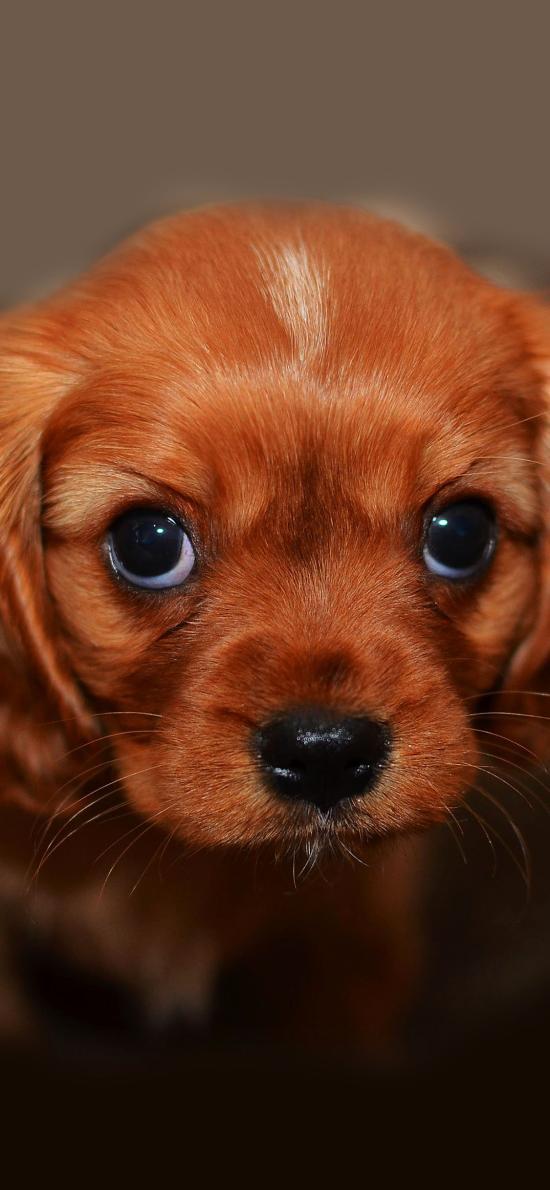 狗狗 犬 汪星人 可爱 萌 宠物