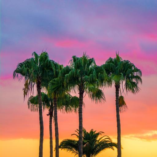 天空 云彩 椰树 自然风景