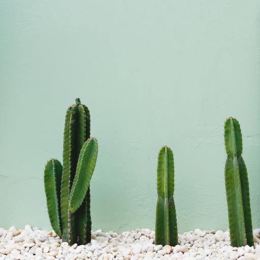 仙人掌 绿色 绿植 沙漠  种植