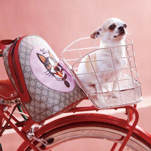 吉娃娃 粉色 品牌 单车 自行车 汪星人