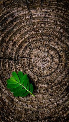 树桩 树干 年轮 绿叶