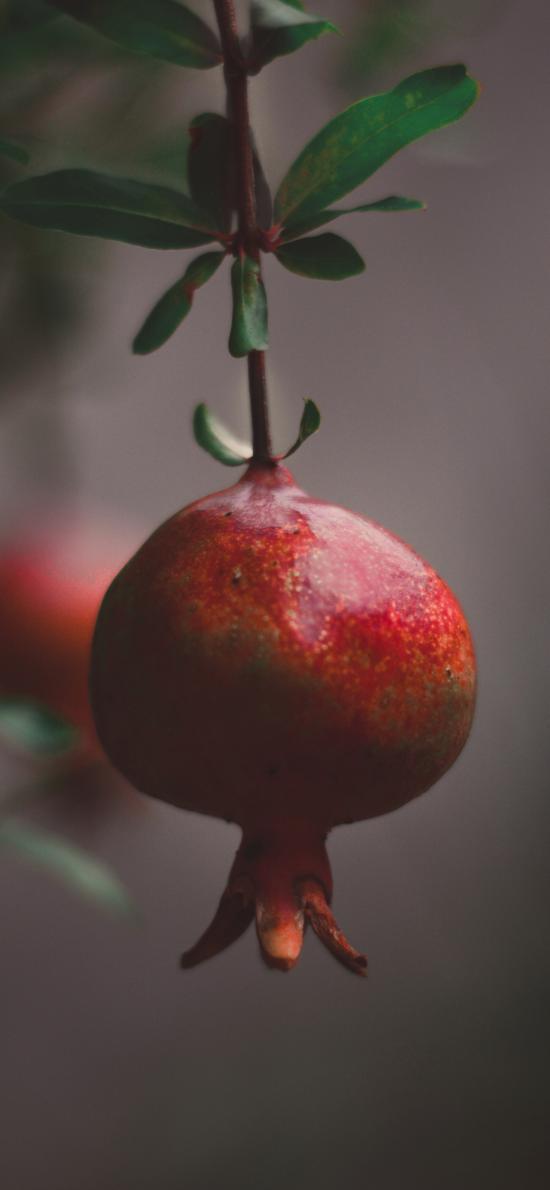 水果 石榴 枝头 悬挂