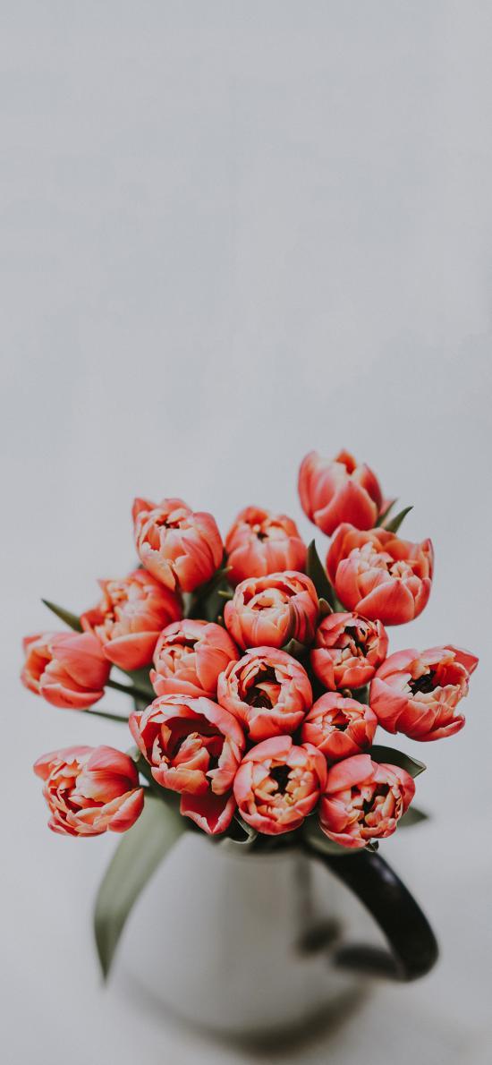 荷兰国花 郁金香 橙色 绽放