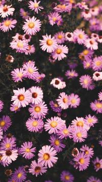 小花 雏菊 遍地 生长