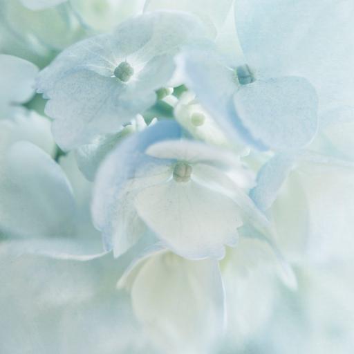 花瓣 小花 鲜花 白皙