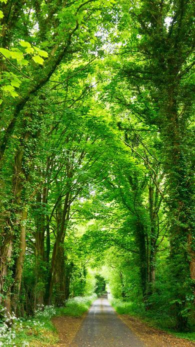 枝繁叶茂 郁郁葱葱 树林 林荫路