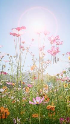 野花 应该 唯美 天空