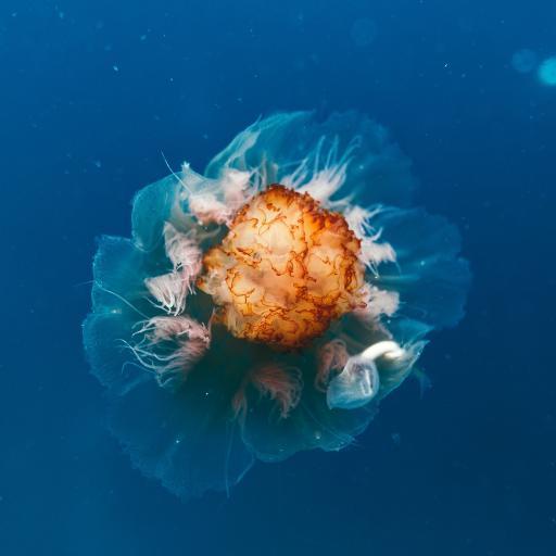 水母 动物 海洋生物  海洋
